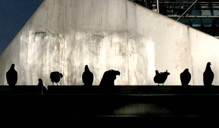 Pigeon Profiles