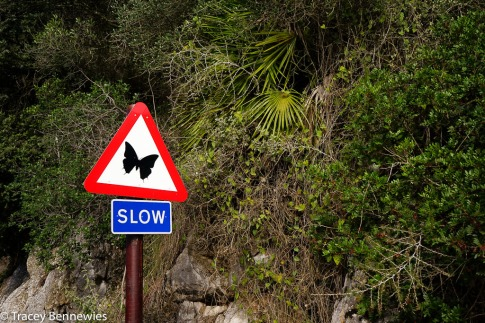 Go slow for butterflies?