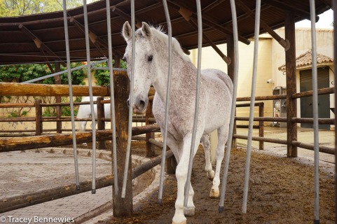 Spain Blog-09381