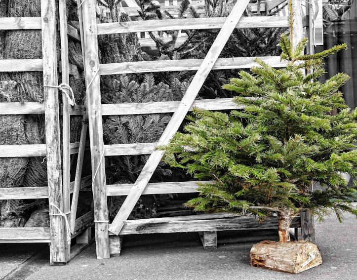 Dec 2 - Xmas Tree