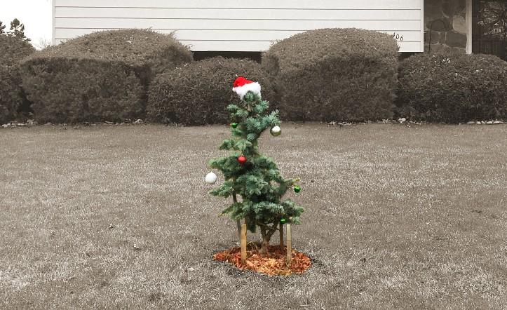 Dec 29 Little Tree