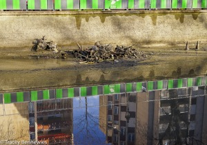 Canal clean-up-01454