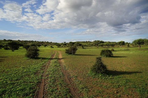 Ah...the open veld