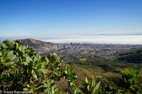 A pretty view of Cape Town