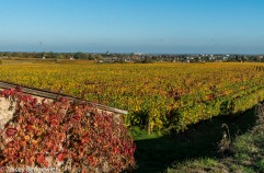 burgundy-wpress-08052