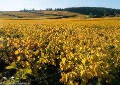 burgundy-wpress-08060