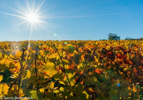 burgundy-wpress-08072
