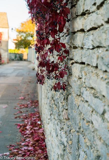 burgundy-wpress-08110