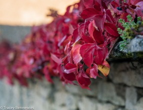 burgundy-wpress-08116