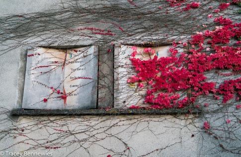 burgundy-wpress-08168